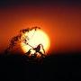 Lovers of the Sun 1. Ferri