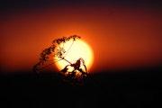 Los amantes del sol 1.