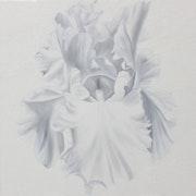 L'iris «blanc del Sueño Blanco».