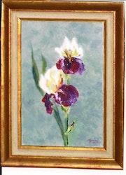 Irises .