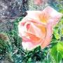Merveille du jardin 2. Didier Dalent