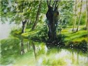 Divine light (Marsh aspect ...) .