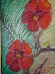 Hibiscus Passion. Christiane Gilbert
