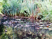 Tribute to Monet - Water Lilies 4 .