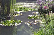 Tribute to Monet - Water Lilies 7 .