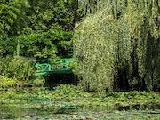 Tribute to Monet - Waterlilies 9 .