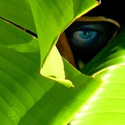 The eye of the artist 2.