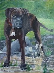 Ebo, my dog, the boxer.