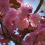 Los colores de la primavera. Ferri