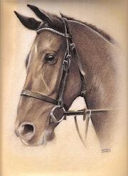 Arabian Horse. Isabelle Maccio Lequeux