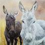 Los burros Mancy. La Souris Verte