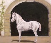Espagnole Horse. Birgit Schnapp