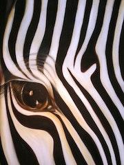 Zebra «nah».