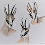 Trois chamois aquarelle originale signée. Patricia Hyvernat
