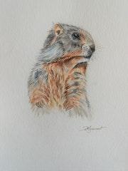 Marmotte aquarelle originale signée. Patricia Hyvernat