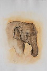 Éléphant d'Asie. Patricia Hyvernat