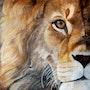 Sunset lion. Bente Jepsen