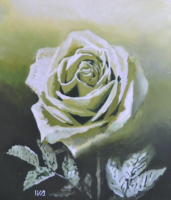 White rose. Ivanna Shmeleva Ivanna Shmeleva