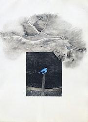 L'oiseau bleu.