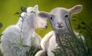 Les moutons.