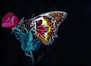 Papillon de jour la nuit.