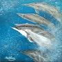 La course des dauphins. Ghislaine Phelut