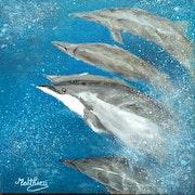 La course des dauphins.