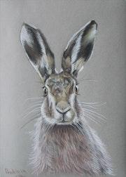 , Hare,. Andrey Antipin