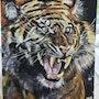 Tigre du Kerala. Gilles Gomard
