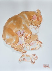 French bouledogue maternity 5, ink on paper.