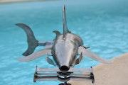 Requin marteau formule 1.