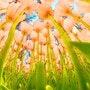 Fanfan la tulipe. Marie Carteron