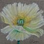 Cousine de La Fleur du champ. Patricia De Chadois