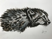 Cheetah n°2.