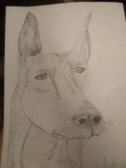 Great Dane Sketch.