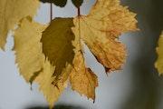 Couleur d'automne.