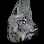 Lynx du Canada. Daniel Bonneau