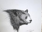 Ours noir. Daniel Bonneau