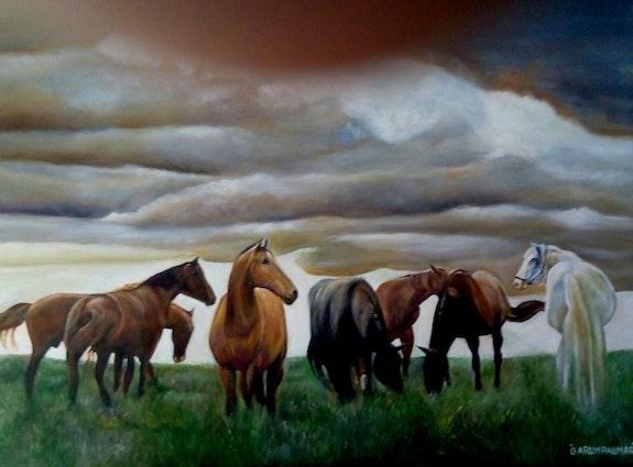 Horses in grass field.  G Arun Kumar