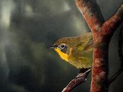 Paruline jaune. Daniel Bonneau