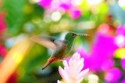 Rêve de colibri.