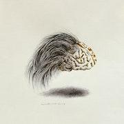 Brainstorming Collection. Safpem - Fmica Organizer Institute