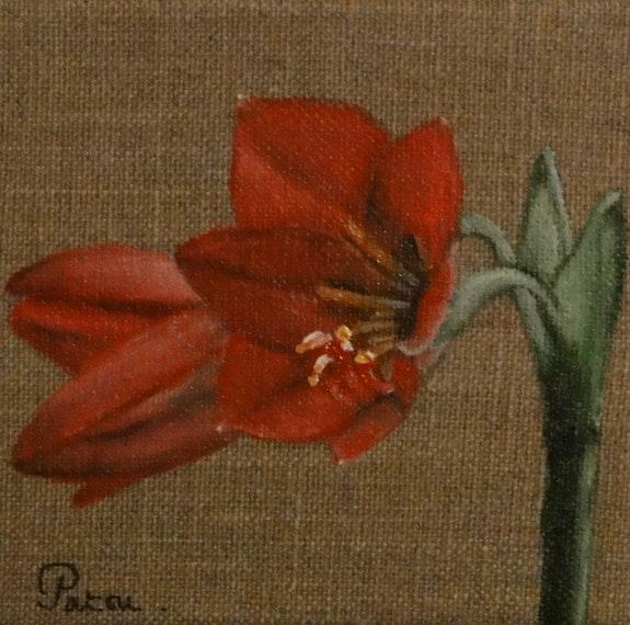L'Amaryllis. Patricia De Chadois Patricia De Chadois
