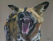 Le loup peint ou lycaon.