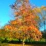 Árboles en otoño. M. Pilar