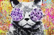 Hippie cat. Vincent Bardou