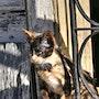 Petit chat de Cuba. Solena432