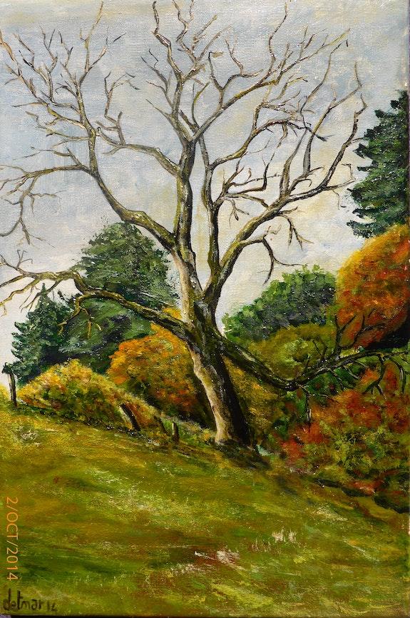Lunacy Of Tree. Olivier Ohms Olivier Ohms