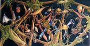 Vue du nid. Sanchelea