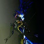 Le Joker et L'oiseau Bleu. Dalhia